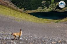 guanaco-laguna-encantada